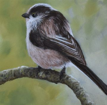 John Silver Original Oil Painting Of A Long Tailed Tit Bird